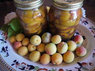 Apricots in Marsala Syrup